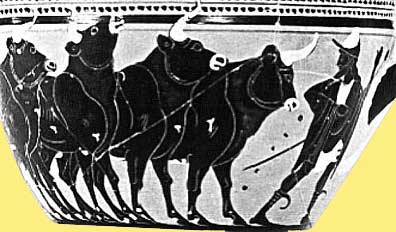 Hermes' cattle of Apollo